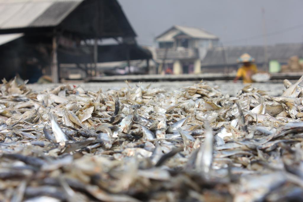 dry fish photo